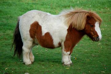 pony im profil