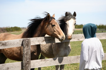 youth with two horse friends