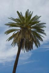 palmtree over blue skies