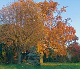 Photo sur Aluminium Rouge mauve autumn park 17