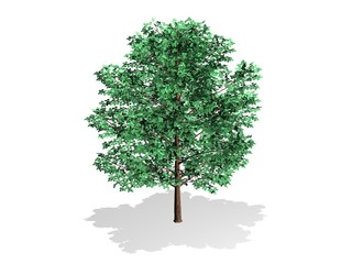 arbre et feuilles vertes