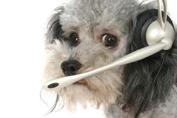 customer service poodle