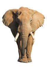 elephant isolated