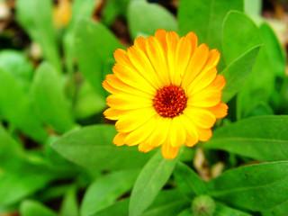 small bright flower