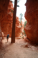 hikers on desert trail
