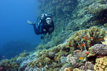 scuba diver in the read sea