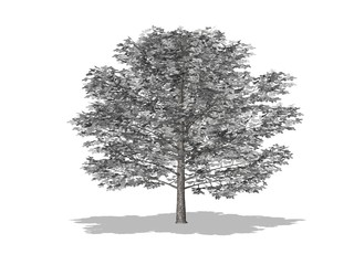 arbre gris et feuilles