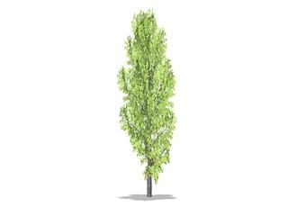 arbre baum et feuilles vertes