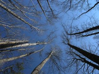 Fotobehang Aan het plafond soaring trees