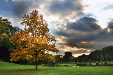 autumn tree and beautiful sky