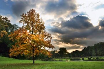 autumn tree and beautiful sky