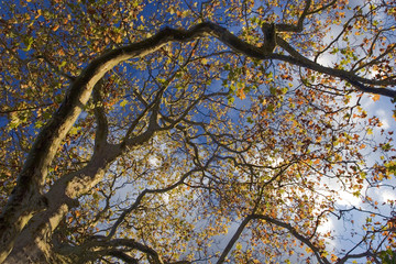 autumn tree with blue sky background