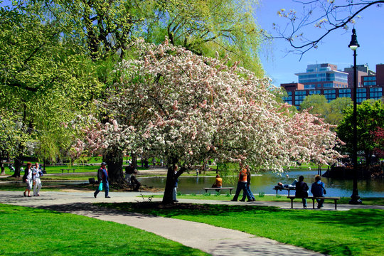 boston public garden in spring