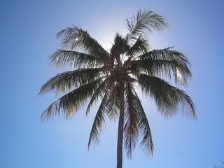 palm tree glowing