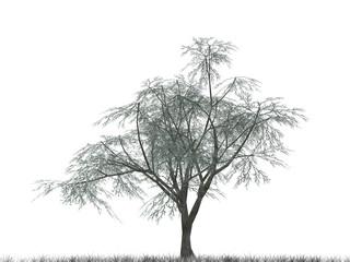 tree_2