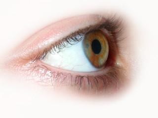 yeux marron