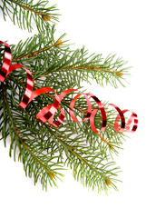 isolated pine branch on white background