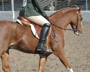 pony25