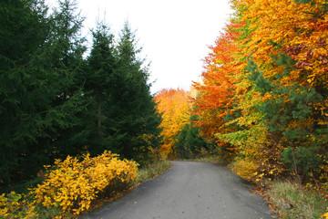 road in autumn landscape