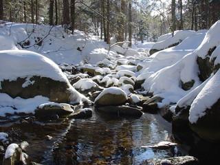 Obraz winter - fototapety do salonu