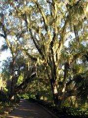 mossy oak on path