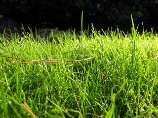 grass close sunlit
