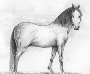 horses, animals, illustrations