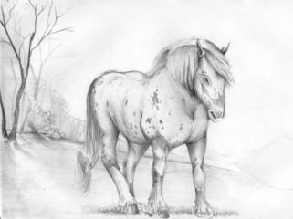 horses, animals, illustrations,