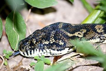 python snake 7.