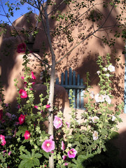 hollyhocks in taos, new mexico