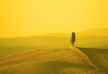 Foto op Canvas Meloen tuscan landscape in yellow sunset light