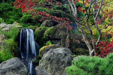 Printed roller blinds Garden japanese tea garden