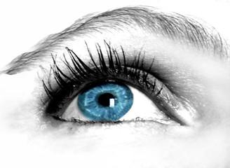 iris bleu intense