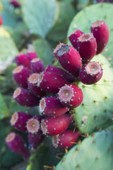 desert's fall fruit