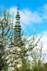 flowering tree with church in background