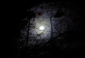 lune et arbre atmosphère inquiétante