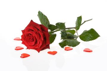 rose herzen