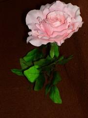 rose -17