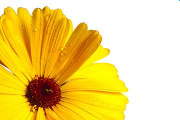 fleur jaune d3