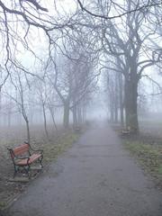 park lane in the fog