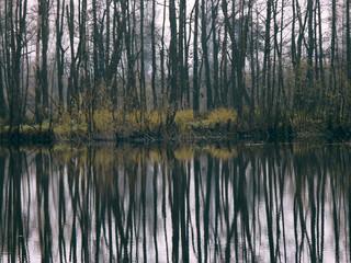 silence of autumn 03