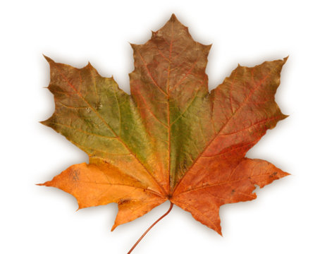 canada national symbol