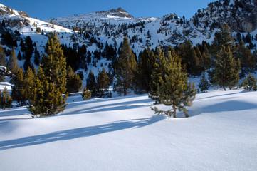 champ de neige