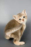 Who had the first pet cat