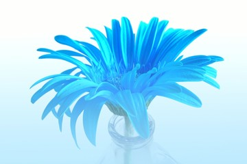 blue flower in blue mist