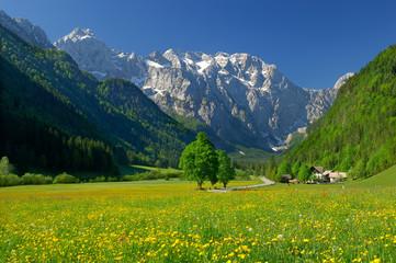 spring in alpine valley in northern slovenia