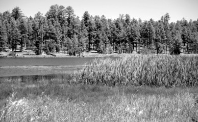 monochrome forest lake 2