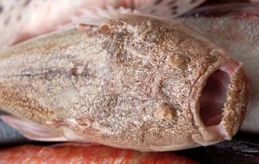 fishing series - ugly fish