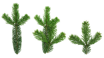 design elements - isolated spruce twigs xxl image