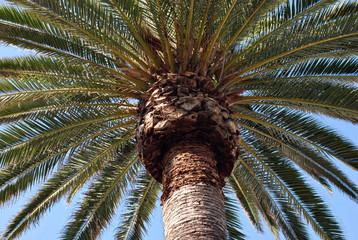 beneath a palm